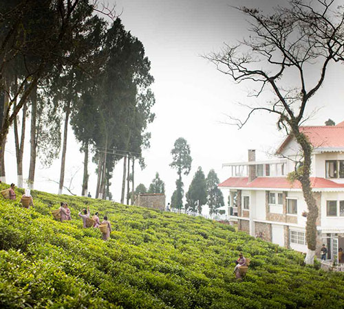 Enchanting Darjeeling Tour