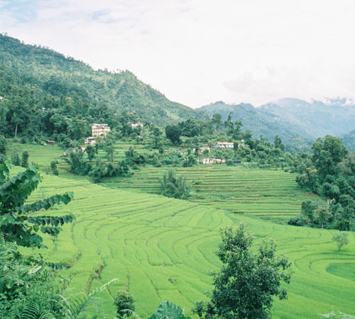 Affordable Sikkim Family Tour